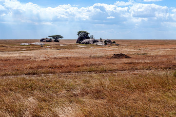 Elephants in the savannah of Tanzania