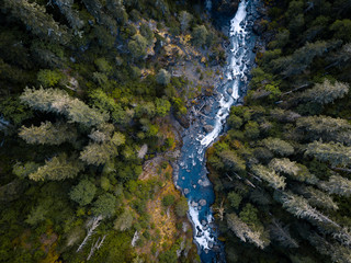 Aerial drone view looking down at a pristine blue mountain river running through the tall trees of the forest Wall mural