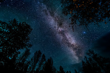 The Milky Way galaxy above forest ( tree line )