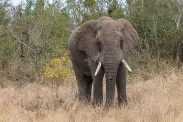 Garden Poster Elephant Elefant 60