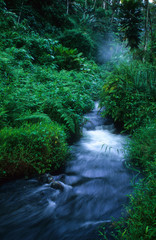 River through the green rainforests of Costa Rica