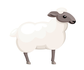 White sheep. Farm domestic animal. Flat style animal design. Vector illustration isolated on white background