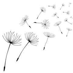 Abstract black dandelion, flying seeds of dandelion - stock vector