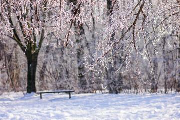 Trees under the snow