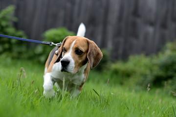 Gassigehen mit dem Hund in grünem Park, Hund schaut nach links