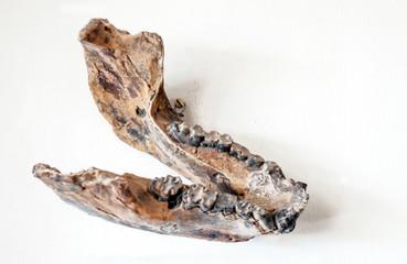 Bone remains in Tanzania
