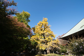神社・不動尊・公園・紅葉・銀杏