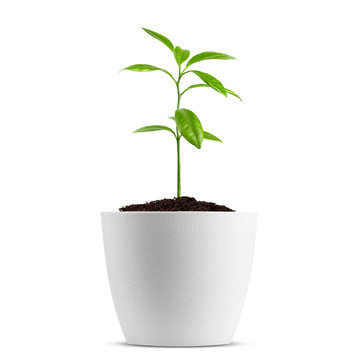 Young plant in pot isolated on the white background, clipping path, full depth of field