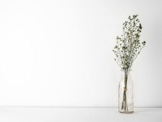 Bouquet of dried and wilted green Gypsophila flowers in glass bottle on white floor and background with copy space