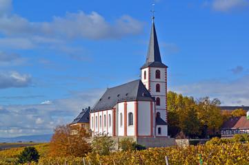 Weinberge in Hochheim