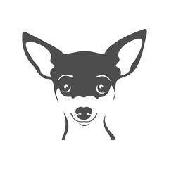 Chihuahua portrait vector image. Head dog Chihuahua on a white background. Dog logo.