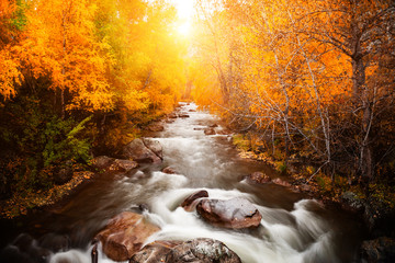 River in autumn forest at sunset. Altai, Siberia, Russia. Long exposure shoot
