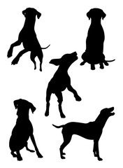 Dalmatian dog pet animal silhouette 03. Good use for symbol, logo, web icon, mascot, sign, or any design you want.