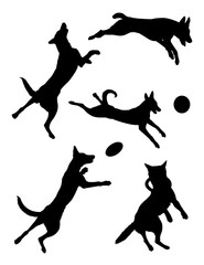 Belgian shepherd dog pet animal silhouette 03. Good use for symbol, logo, web icon, mascot, sign, or any design you want.