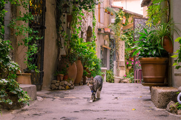 Mougins, France, June 6th , 2016. Cat strolling on a narrow street in the old town Mougins in...
