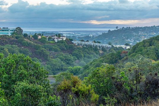 Houses on a Forested Hill in a Suburb, Belmont, California