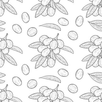 Shea. Branch, leaves, fruit. Sketch. Wallpaper, seamless, texture.