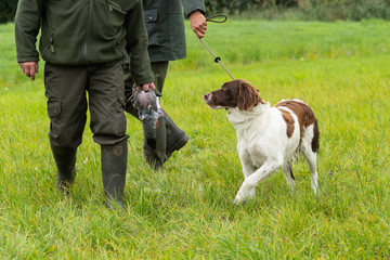 Photo Blinds Dog Dutch partridge dog, Drentse patrijs hond, walking on a leash with two hunters holding a pigeon in a field