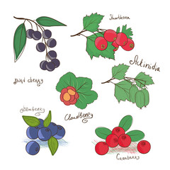 Rare berries. Doodle, sketch. Set. Blackberries, blueberries, sludberry, bird cherry, hawthorn