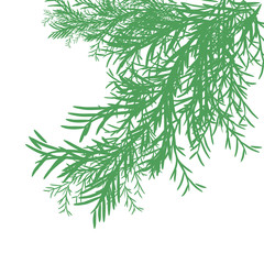 Spruce. Branch. Green on a white background. Christmas card. Silhouette.