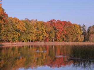 Jesień nad jeziorem.