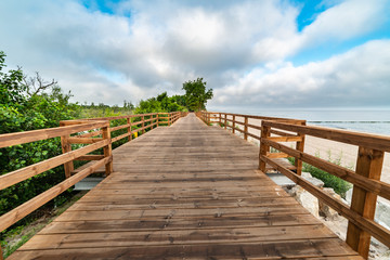 wooden path along the sea