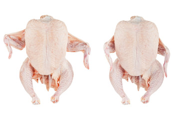 Two raw chickens close up isolated on white background