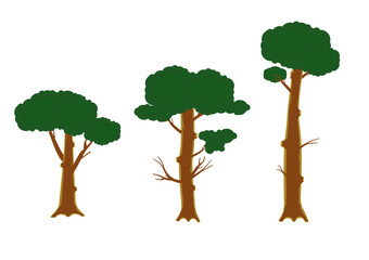 Three graphical growing pine trees. Vector Illustration