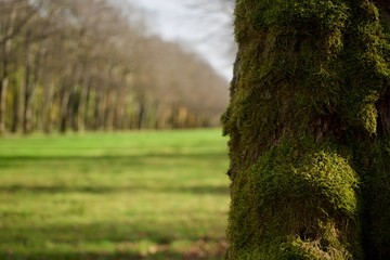 A tree with moss