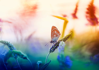 small golubyanka butterfly sits on a summer glade surrounded by blue flowers and bright sun