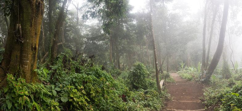 Jungle in rain, mist and fog, Bali