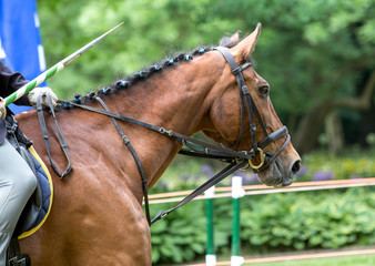 Dressage horse!!!