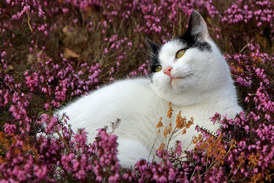 Cat in flowers.
