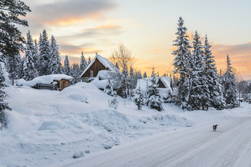 Siberian village in winter at sunset, at houses near the forest, no people, the dog is running...