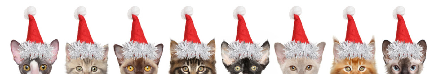 Large group of kitten half-face in Santa red hats