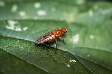 Fliege, Fliegen, Insekten