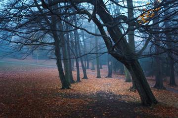 Schiefe Bäume in einem dunklen Nebelwald, Jahreszeit Herbst