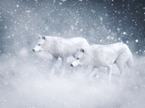 3D rendering of two majestic white wolfs in snow.