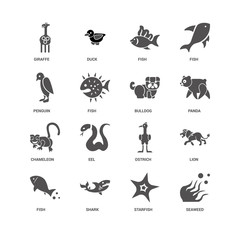 Seaweed, Panda, Bulldog, Fish, Lion, Giraffe, Penguin, Chameleon
