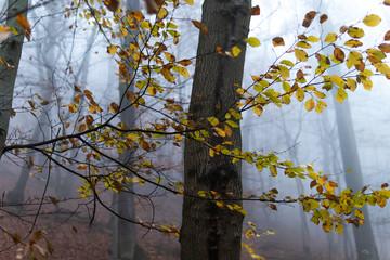 Die letzten Blätter vom Herbst hängen noch an den Bäumen. Im Hintergrund Nebel