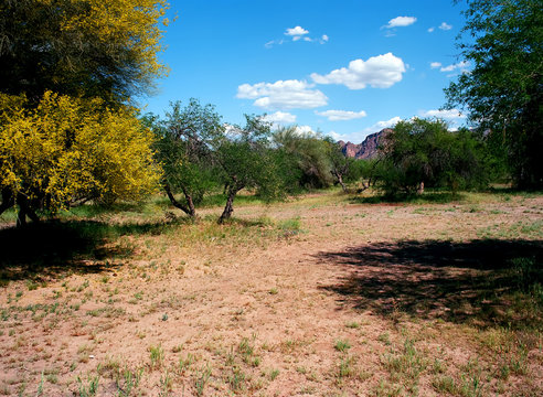 Usury Mountain Park Arizona