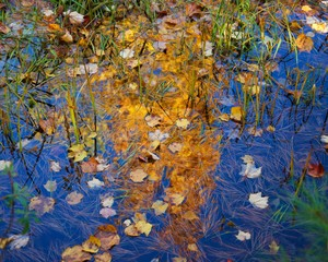 autumn leaves on water, looks like abstract or impression painting