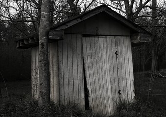 Tree growing into an old shed.