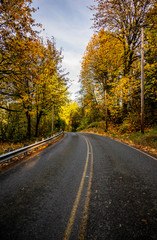 Winding road along autumn forest