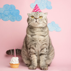Congratulations on your birthday, a cat in a festive cap with cake.Pink background