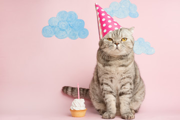 Foto op Plexiglas Kat Merry kitty, birthday. Banner, anniversary or holiday