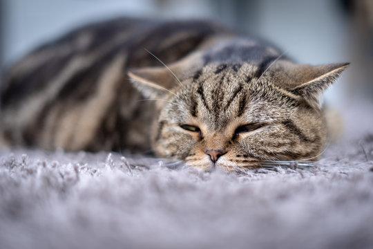 Sick  cat medicines for sick pills spilling out of bottle