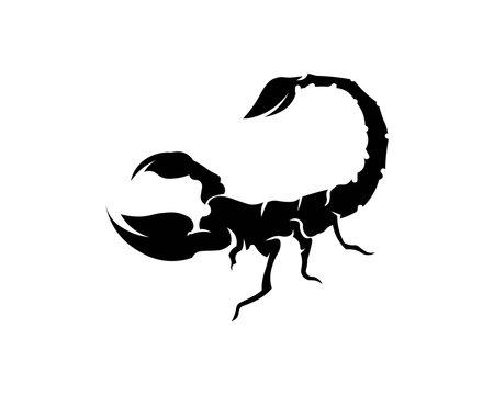 Scorpion Logo Template Vetor illustration