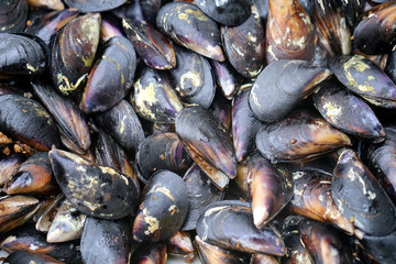 Photo background close-up of delicious seafood mussels