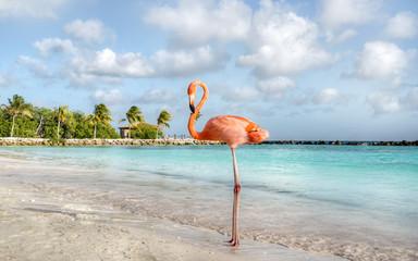Garden Poster Flamingo Aruba Island